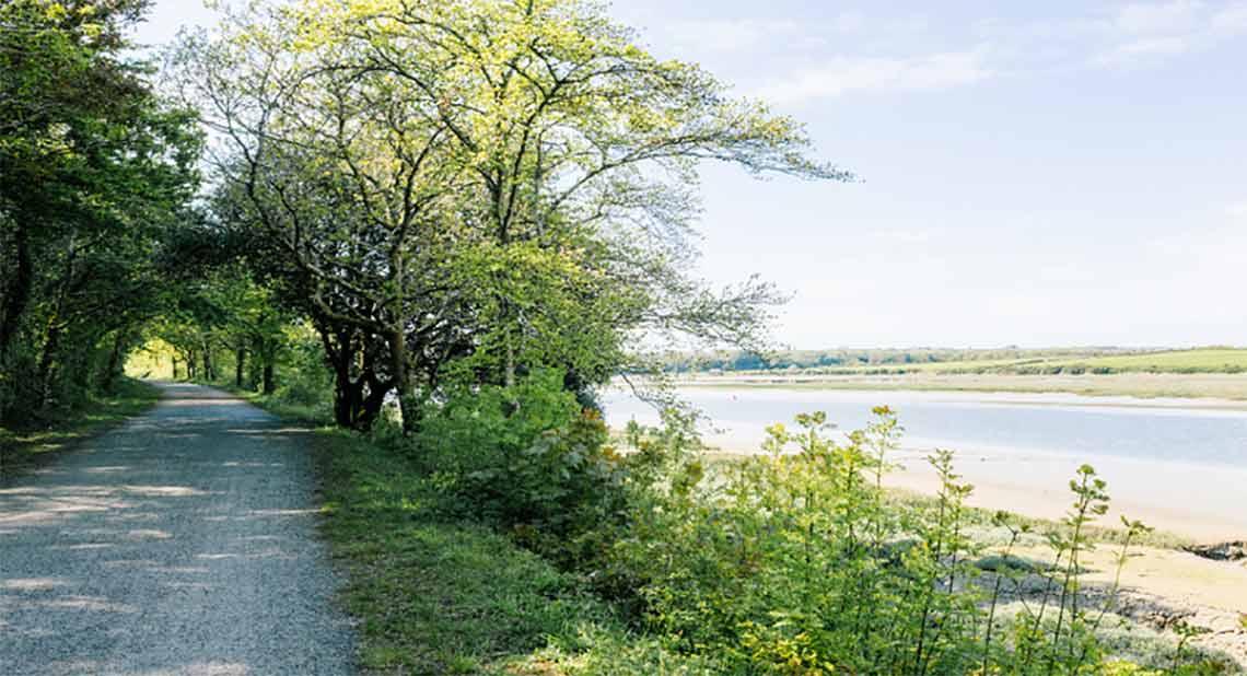 The Camel Trail near Wadebridge